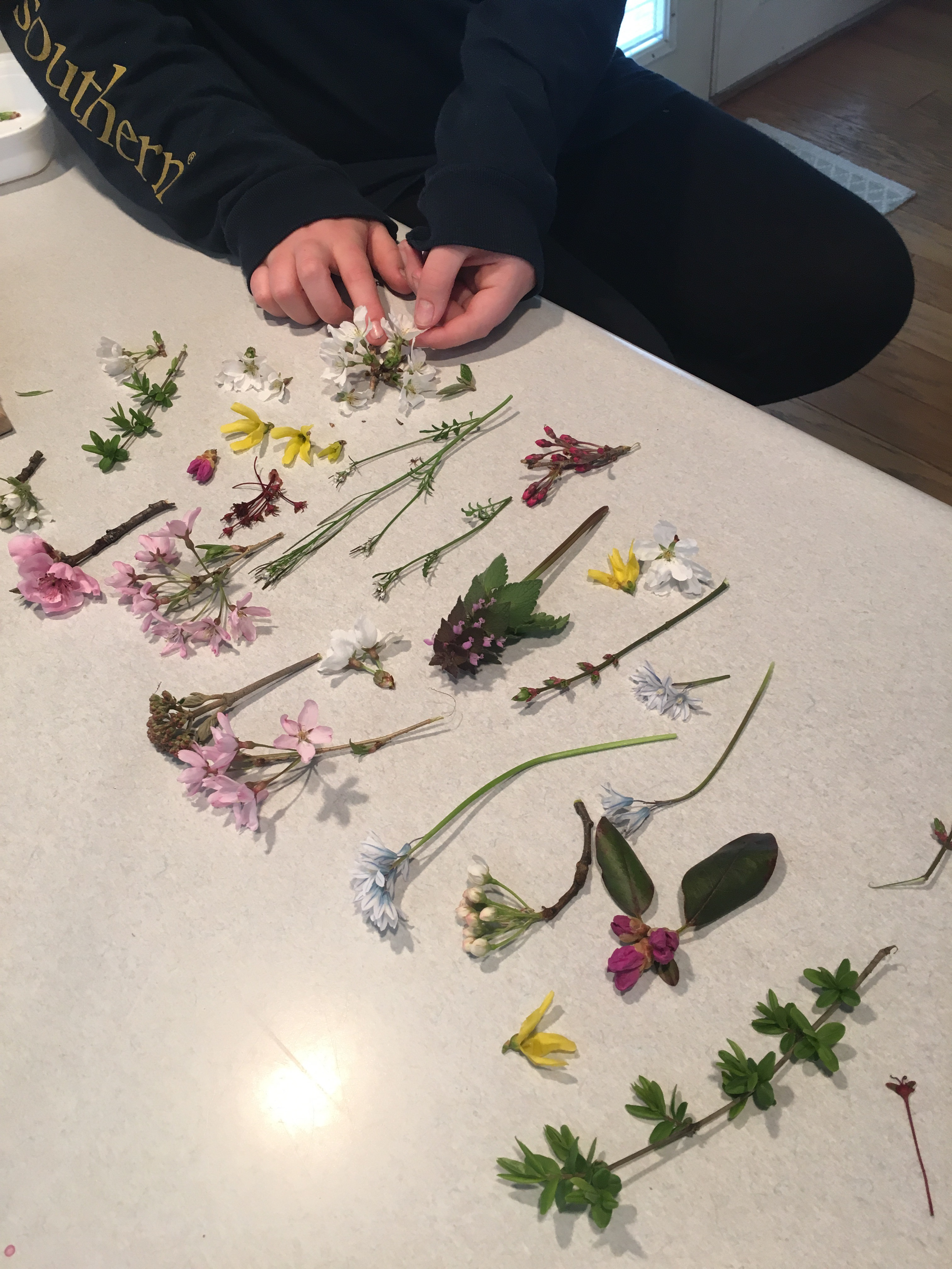 Our Wonderful Spring Activity Pressing Flowers – Heather Holleman